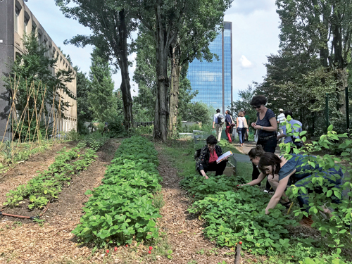 Urban agriculture at the heart of urban projects: diversity of forms and functions